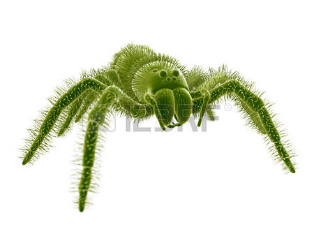 Wolf Spider clipart #16, Download drawings