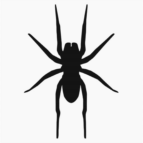 Wolf Spider clipart #6, Download drawings