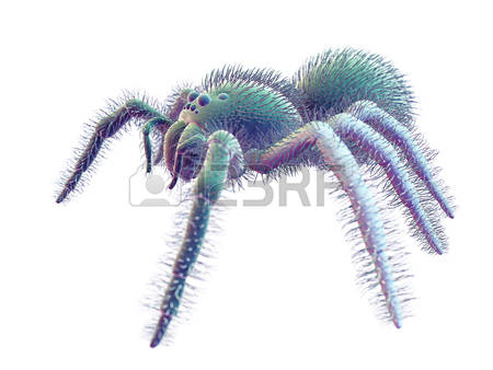 Wolf Spider clipart #9, Download drawings