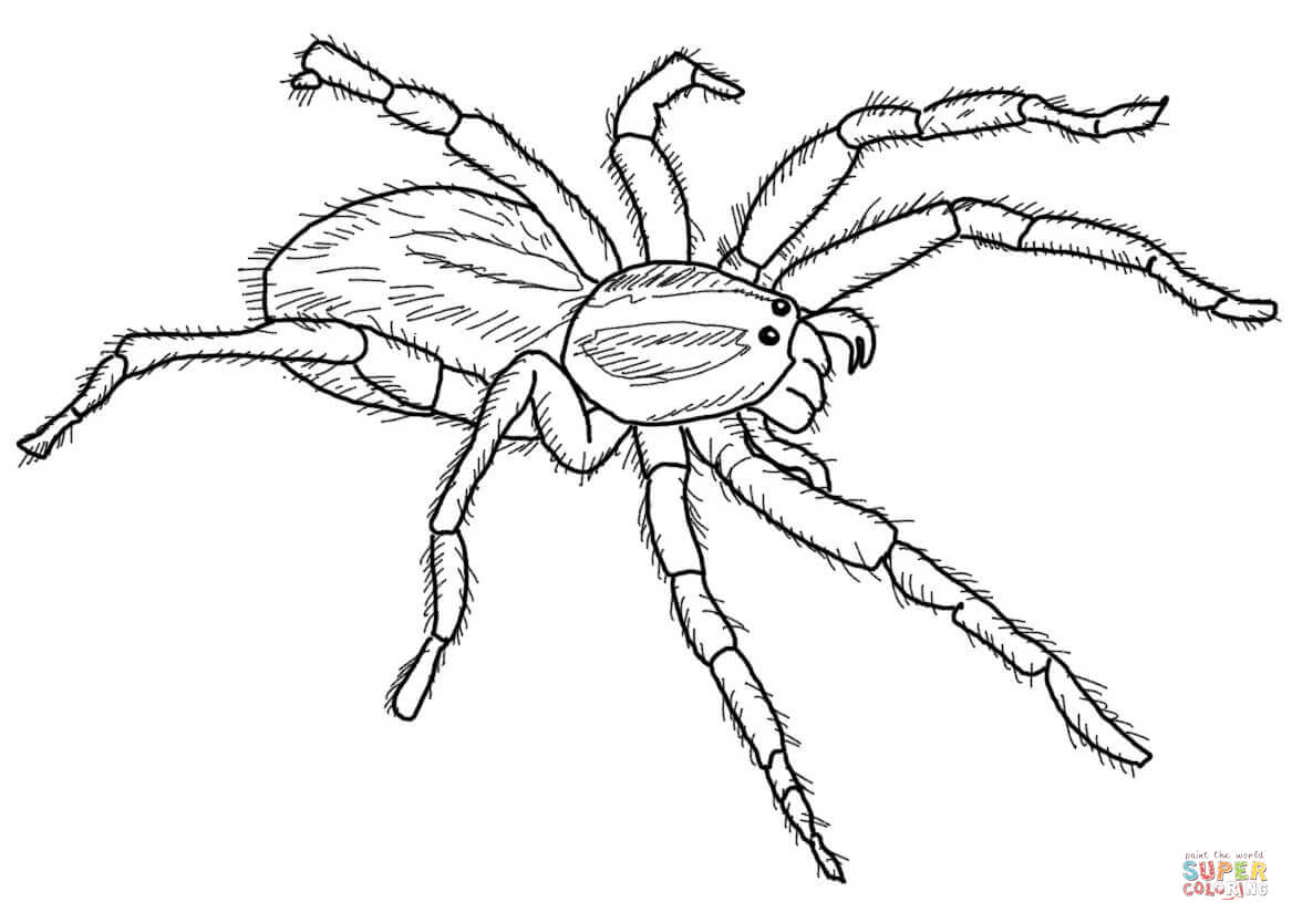 Wolf Spider coloring #10, Download drawings