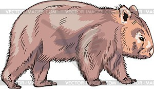 Wombat clipart #12, Download drawings