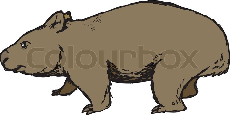 Wombat clipart #9, Download drawings