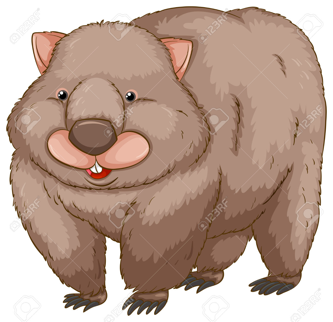 Wombat clipart #10, Download drawings