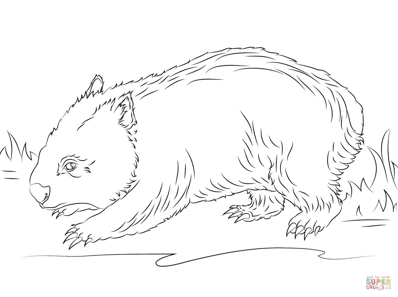 Wombat coloring #14, Download drawings