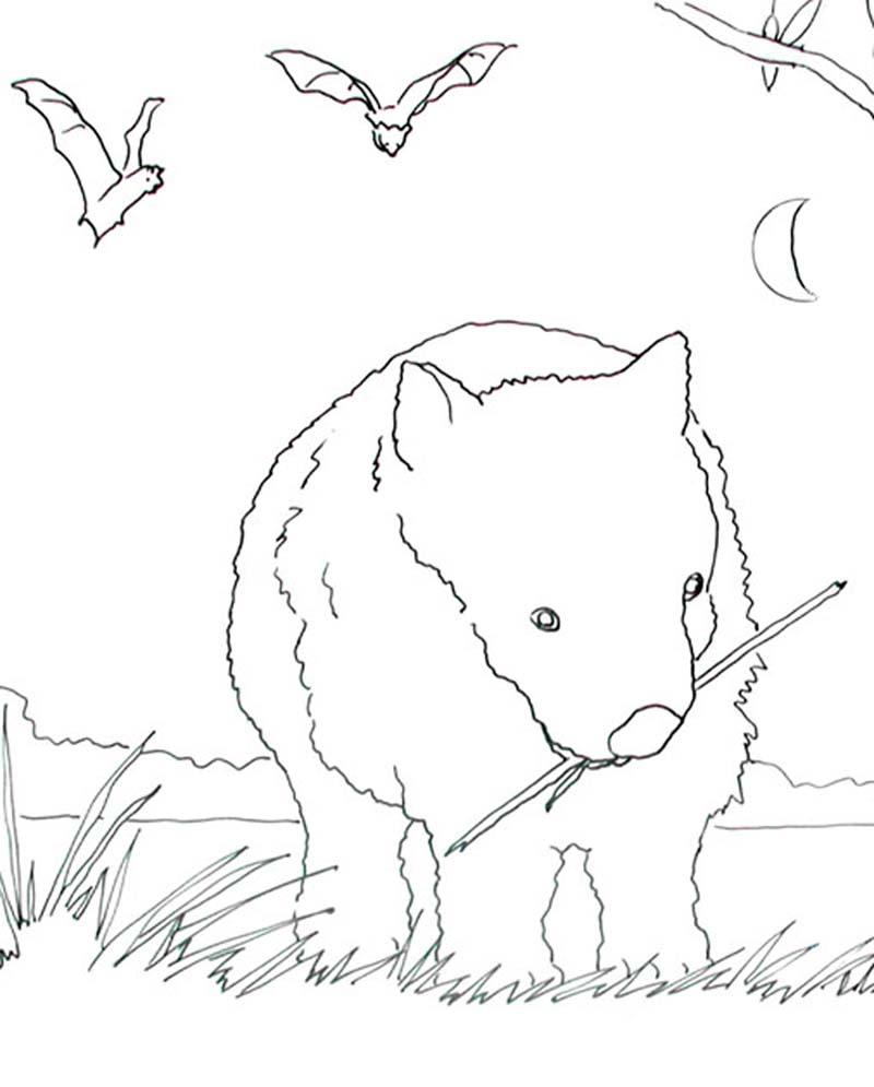 Wombat coloring #15, Download drawings