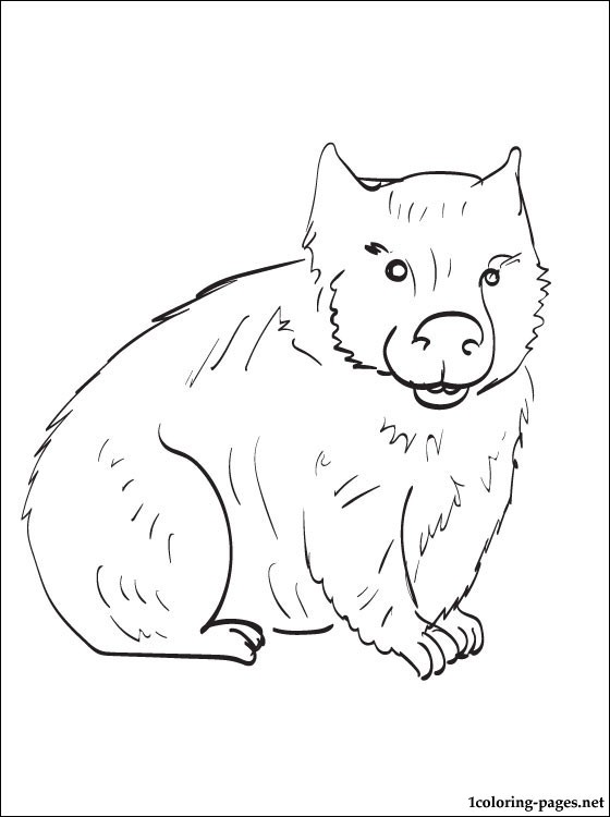 Wombat coloring #19, Download drawings