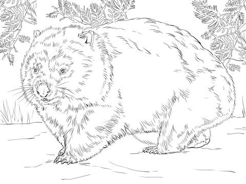 Wombat coloring #17, Download drawings