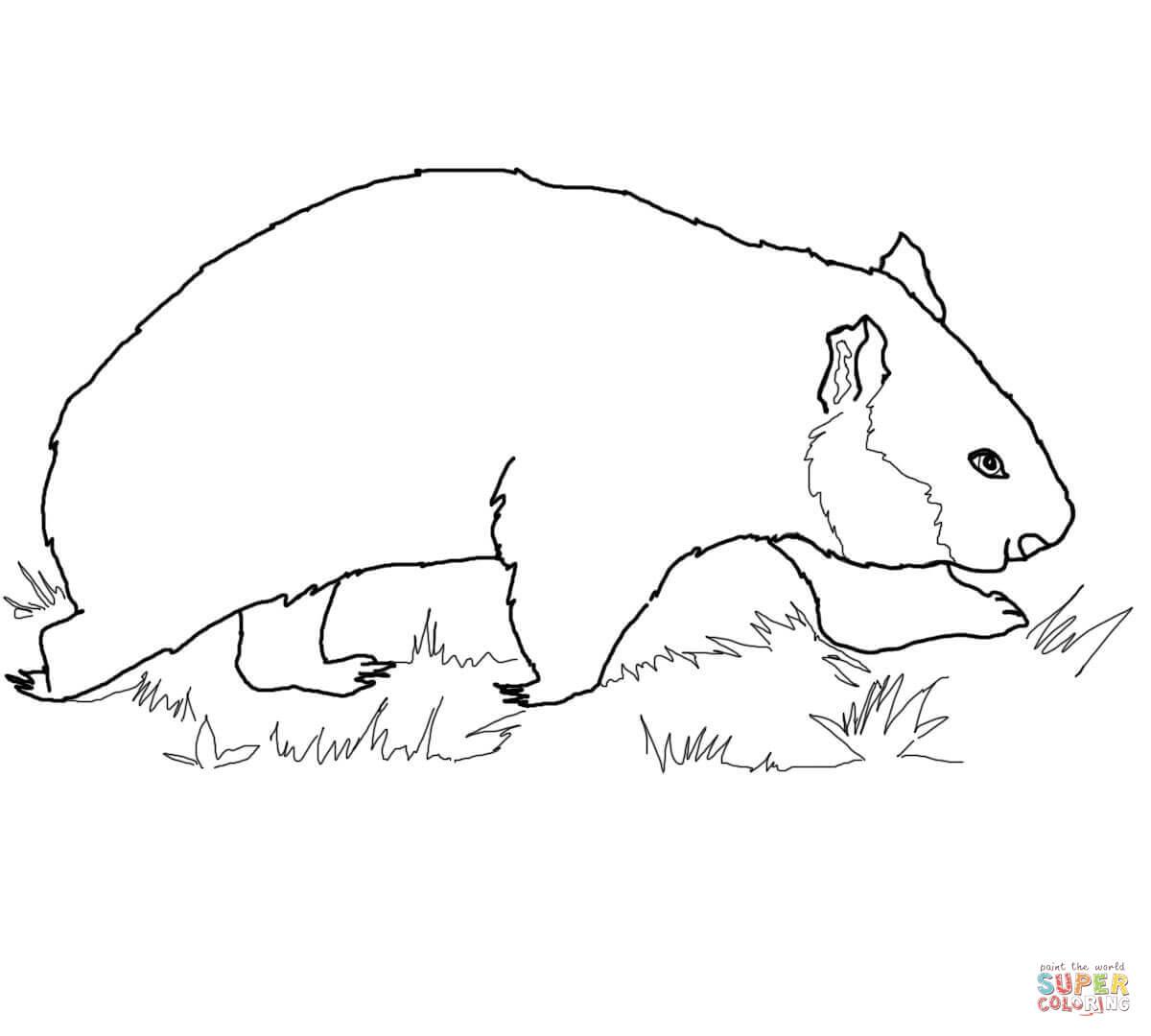 Wombat coloring #5, Download drawings