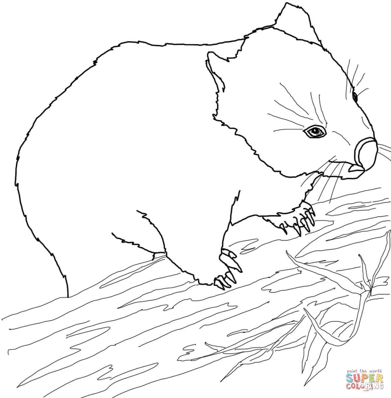 Wombat coloring #10, Download drawings