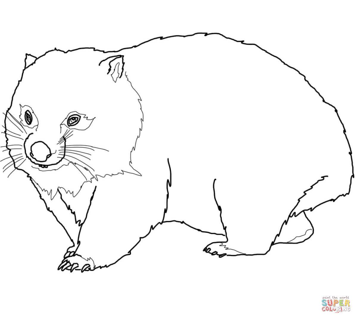 Wombat coloring #6, Download drawings