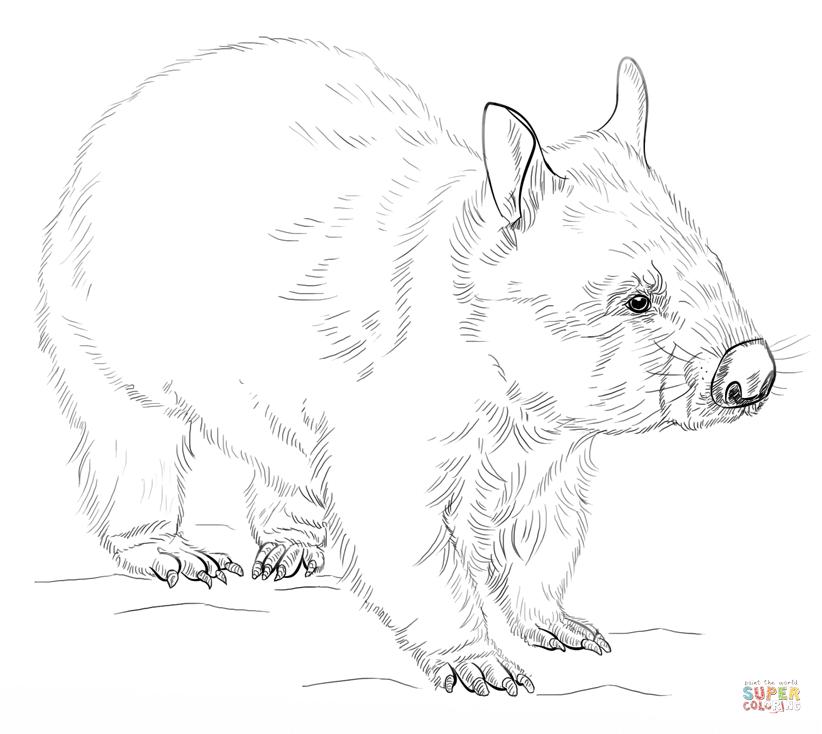 Wombat coloring #9, Download drawings