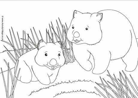 Wombat coloring #7, Download drawings