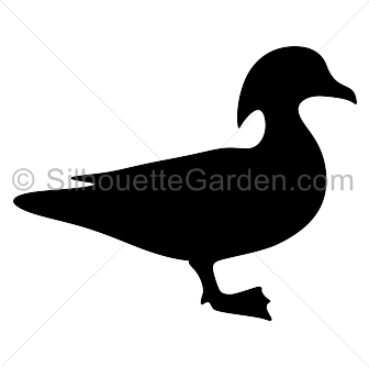 Wood Duck clipart #5, Download drawings