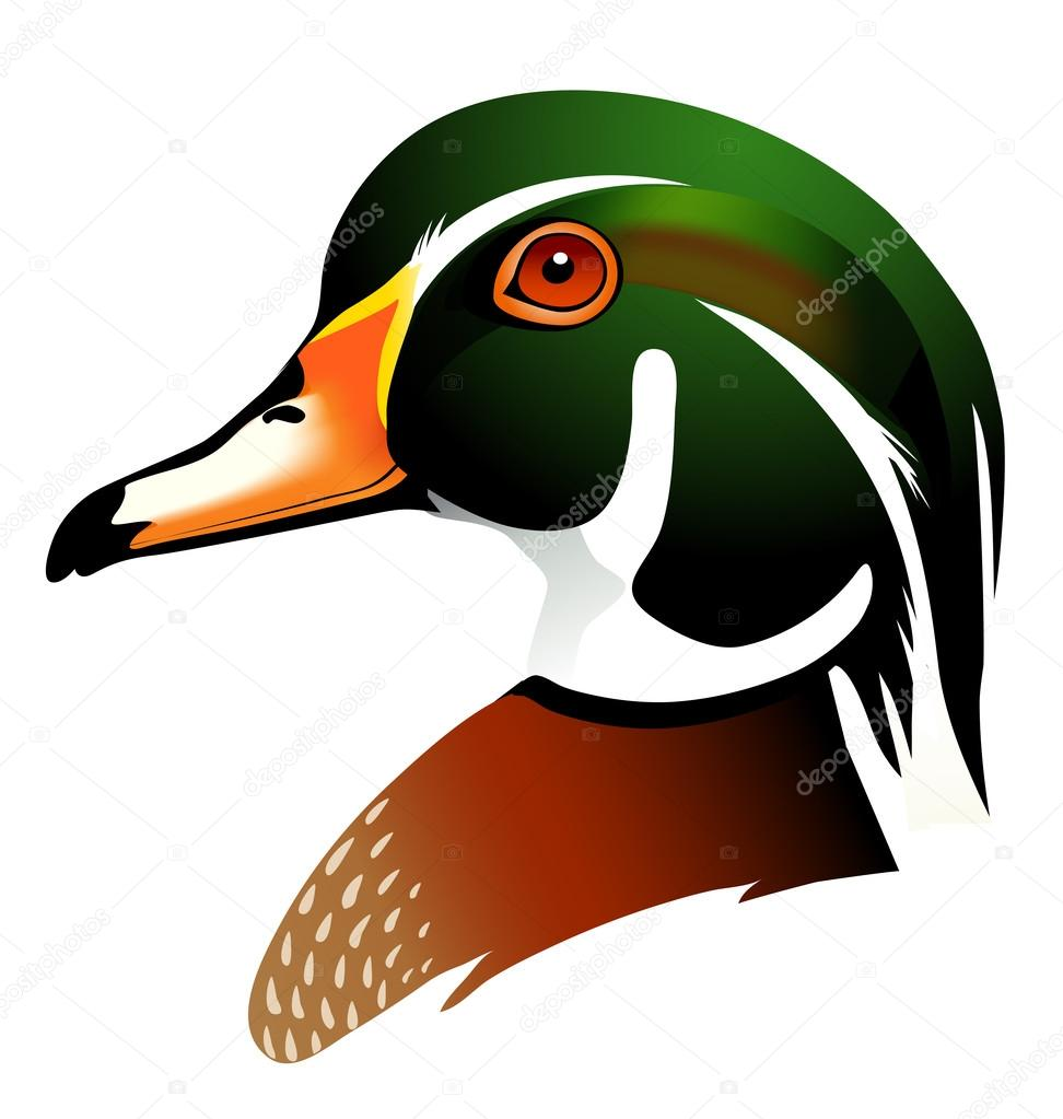 Wood Duck clipart #20, Download drawings