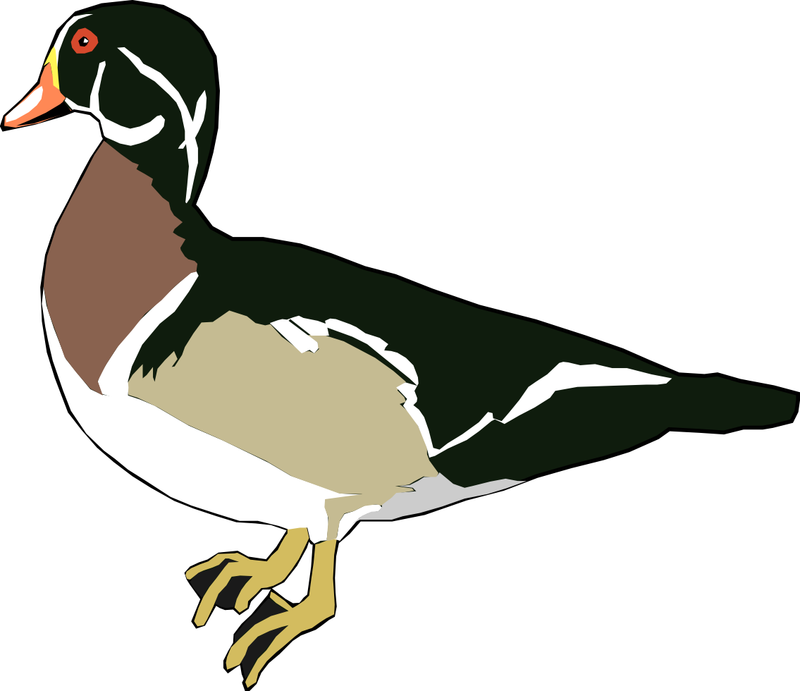 Wood Duck clipart #15, Download drawings