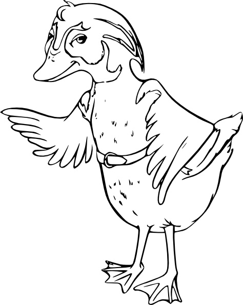 Wood Duck clipart #13, Download drawings