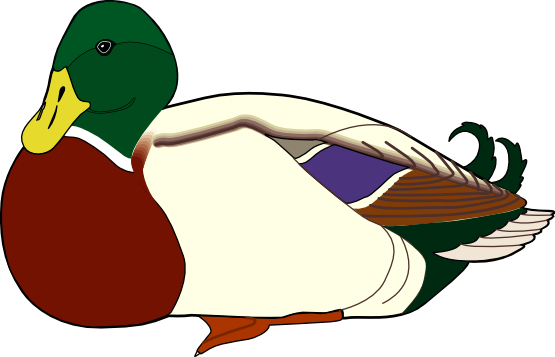 Wood Duck clipart #4, Download drawings