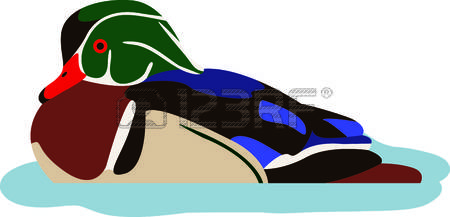 Wood Duck clipart #11, Download drawings