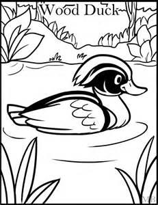 Wood Duck coloring #3, Download drawings
