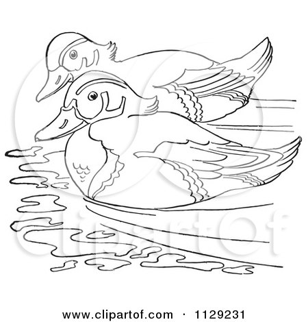 Wood Duck coloring #14, Download drawings