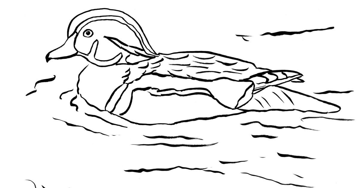 Wood Duck coloring #15, Download drawings