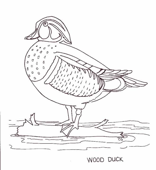 Wood Duck coloring #5, Download drawings