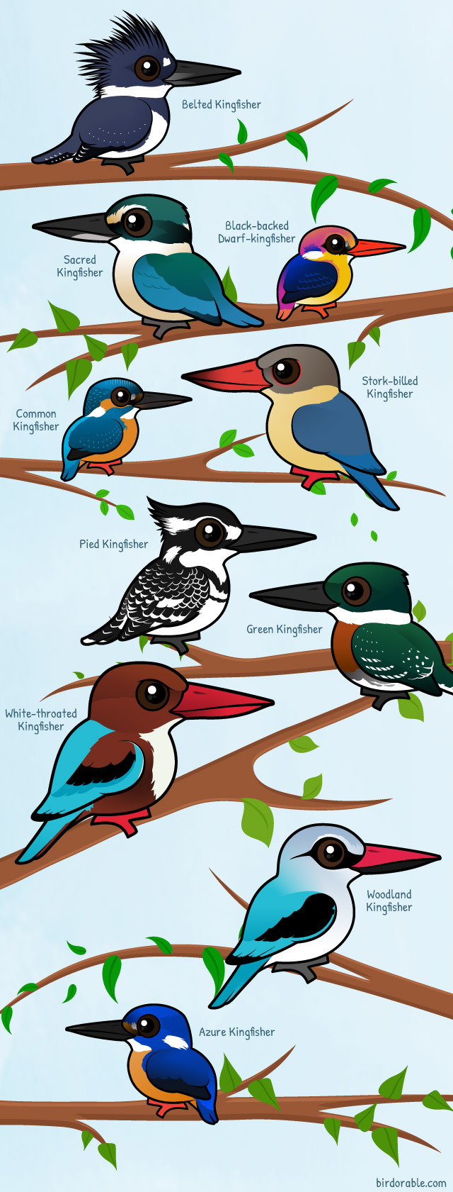 Woodland Kingfisher coloring #12, Download drawings