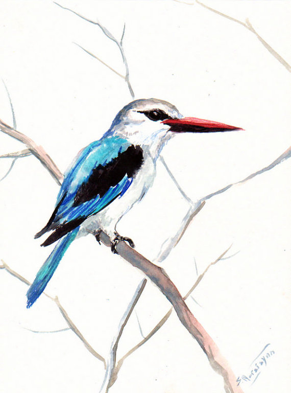 Woodland Kingfisher coloring #18, Download drawings