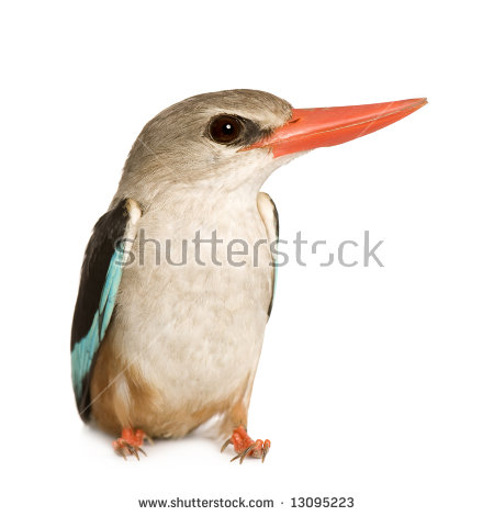 Woodland Kingfisher clipart #13, Download drawings