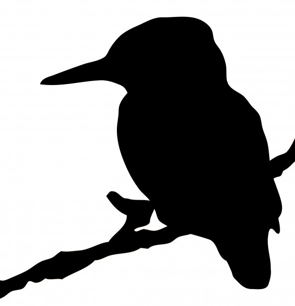 Belted Kingfisher svg #1, Download drawings