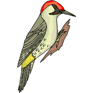 Woodpecker clipart #20, Download drawings
