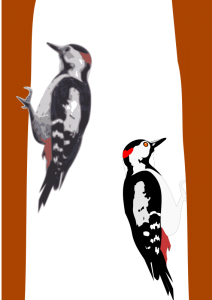 Woodpecker clipart #8, Download drawings