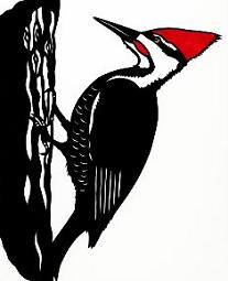 Woodpecker clipart #15, Download drawings