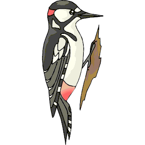 Woodpecker clipart #11, Download drawings
