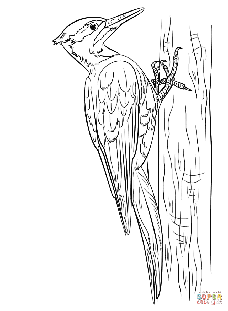 Woodpecker coloring #17, Download drawings