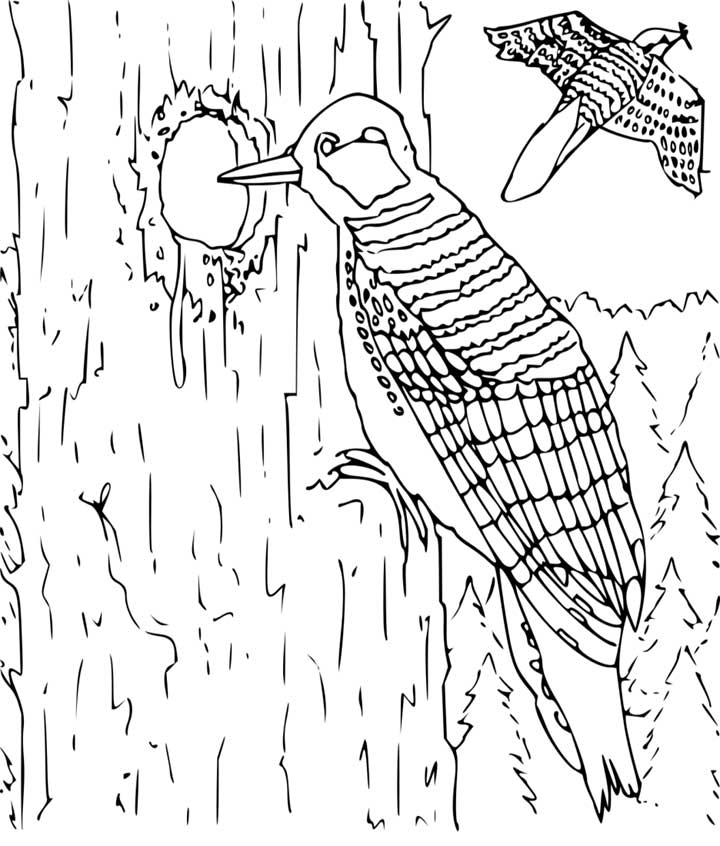 Woodpecker coloring #10, Download drawings