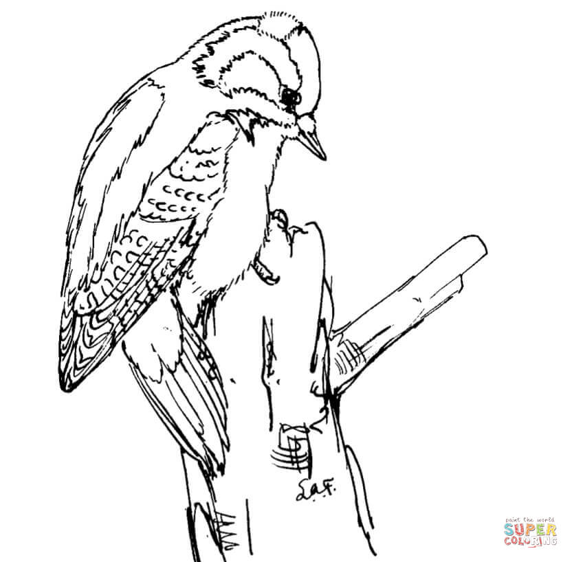 Woodpecker coloring #8, Download drawings