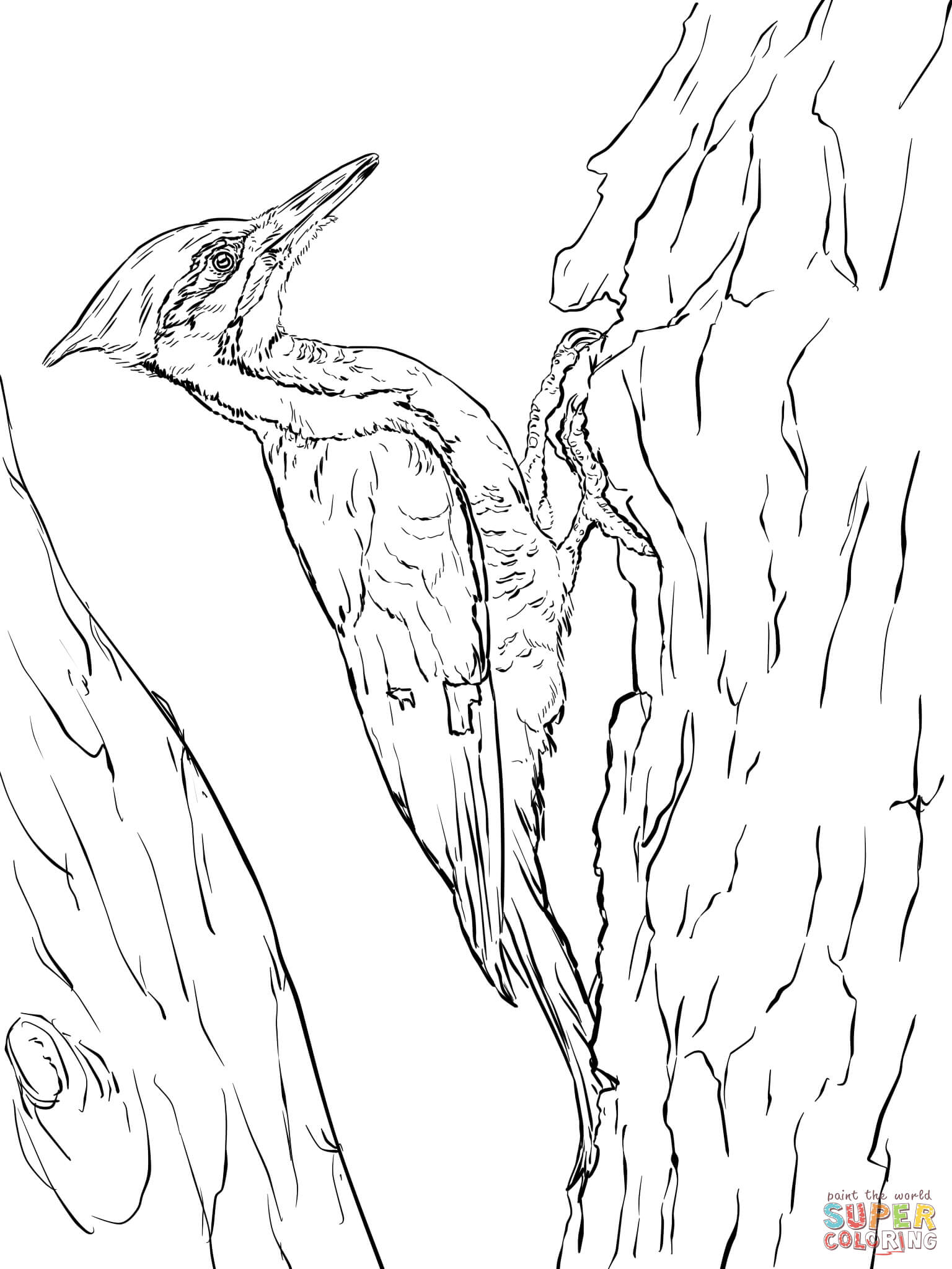 Woodpecker coloring #12, Download drawings