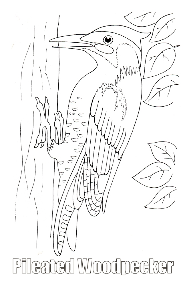 Woodpecker coloring #4, Download drawings