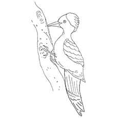 Woodpecker coloring #1, Download drawings