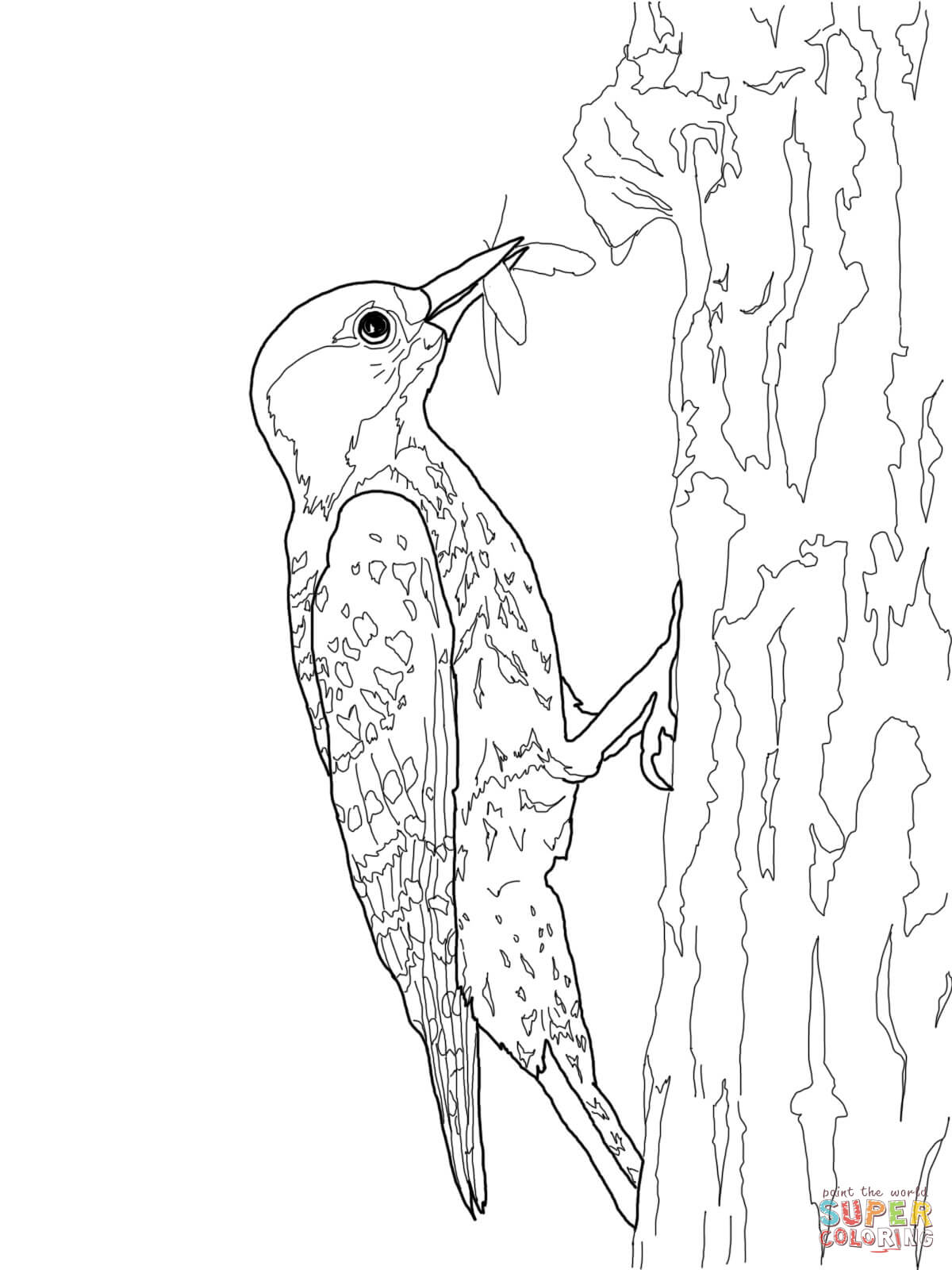 Woodpecker coloring #14, Download drawings