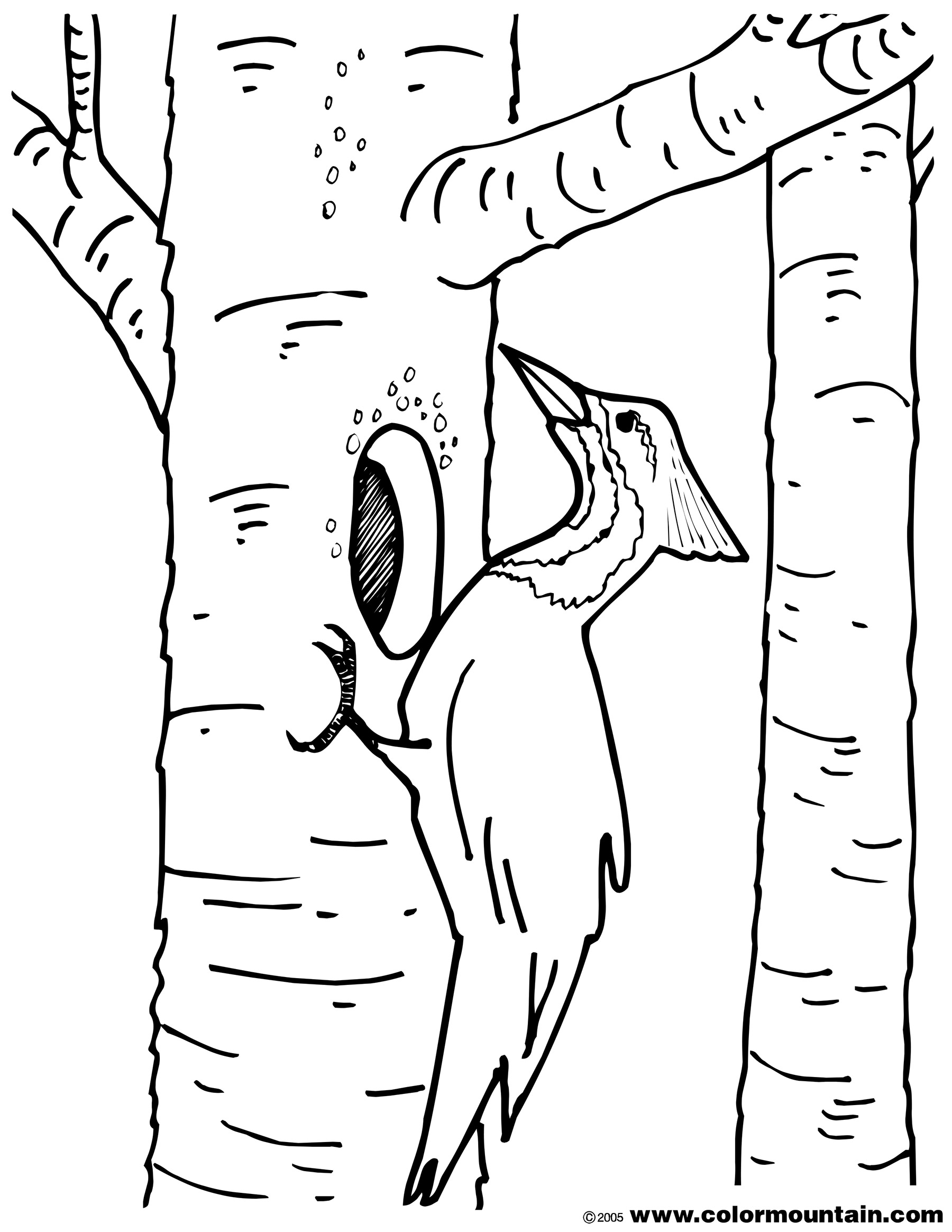 Woodpecker coloring #11, Download drawings