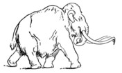 Woolly Mammoth coloring #2, Download drawings