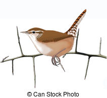 Wren clipart #3, Download drawings