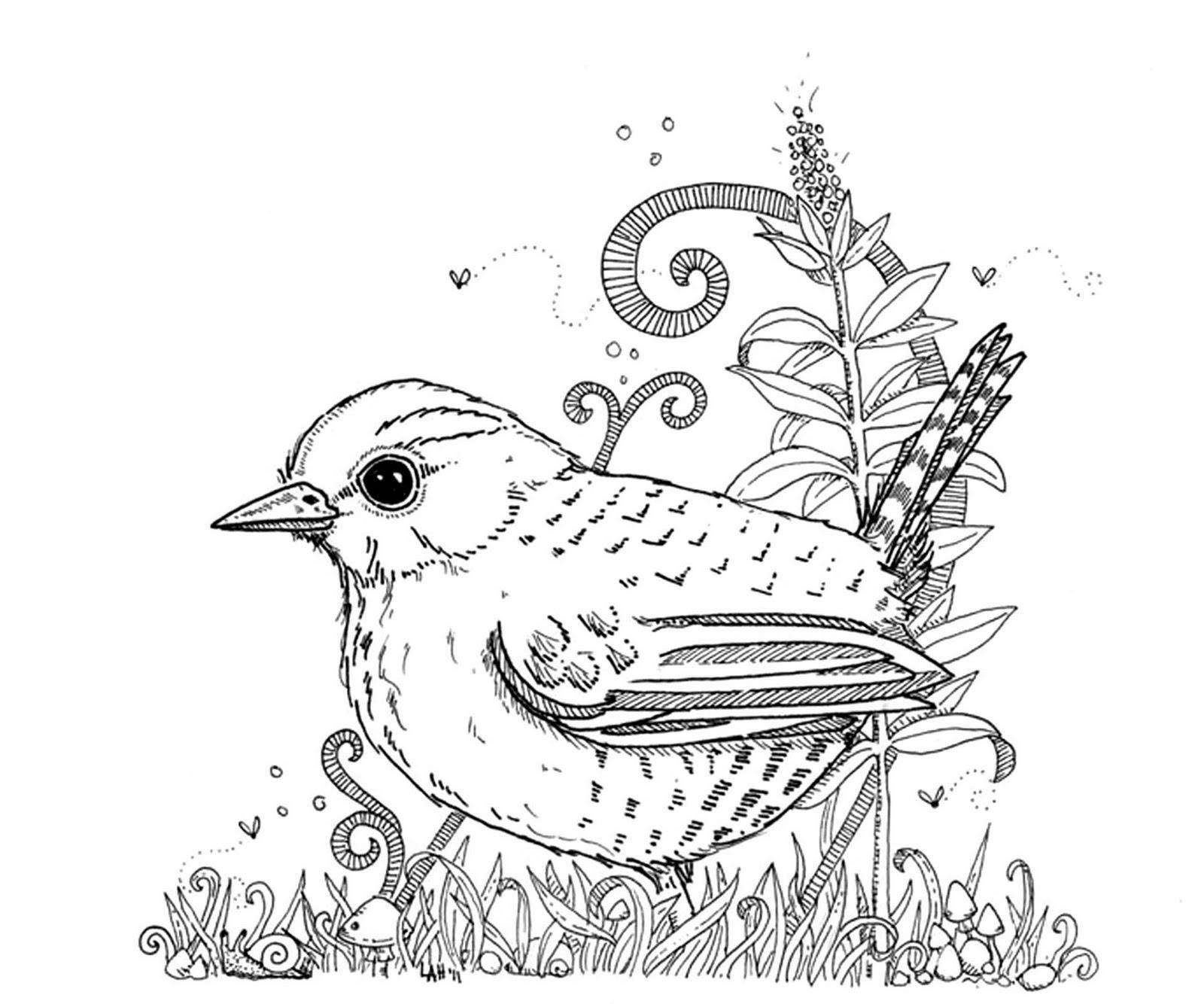 Wren coloring #4, Download drawings