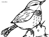 Wren coloring #17, Download drawings