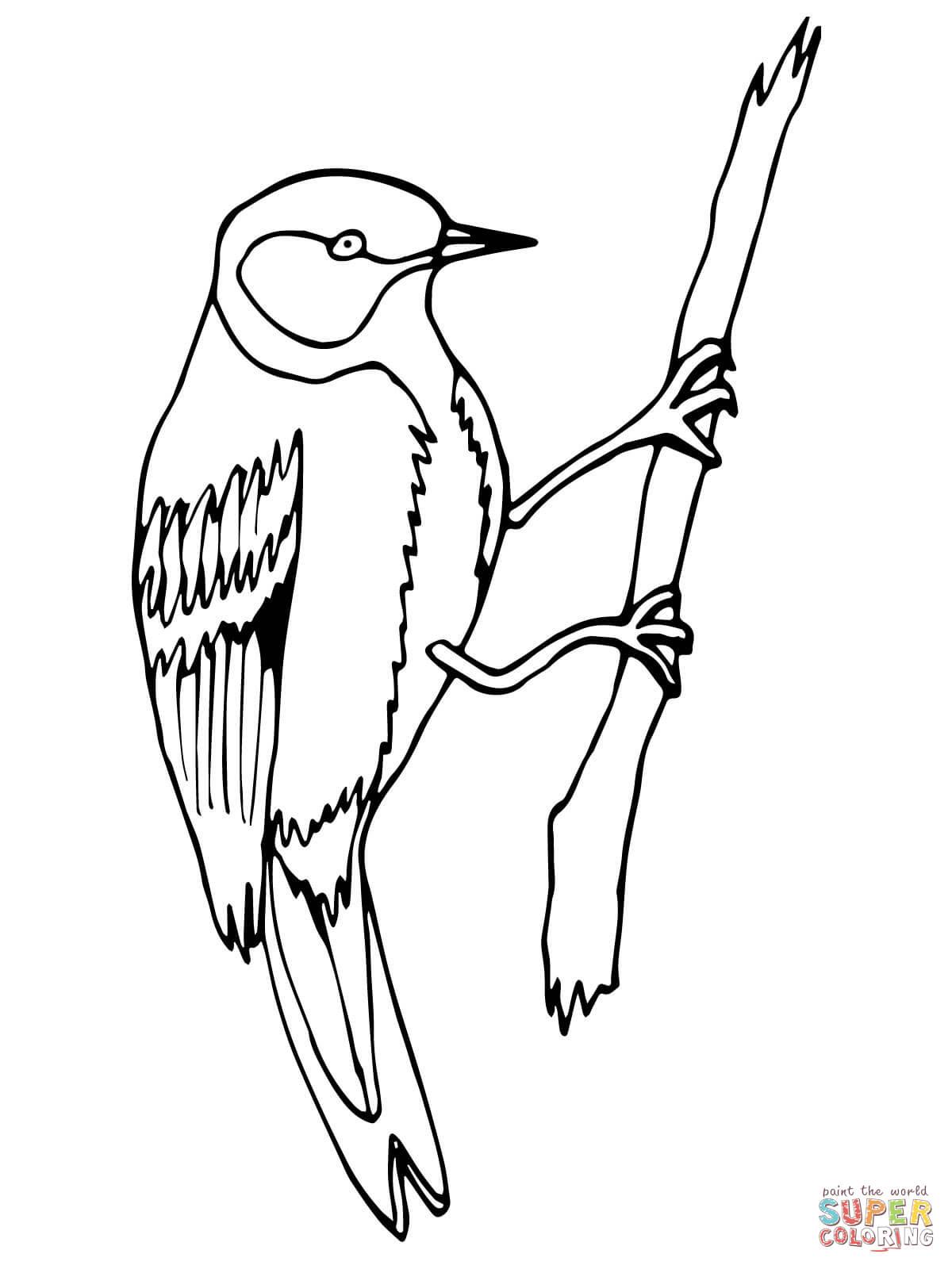 Wren coloring #7, Download drawings