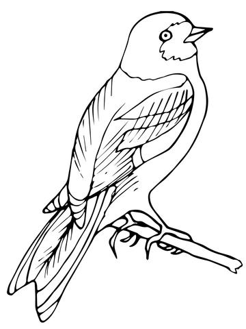 Wren coloring #1, Download drawings