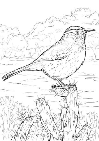 Wren coloring #8, Download drawings
