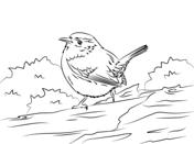 Wren coloring #10, Download drawings